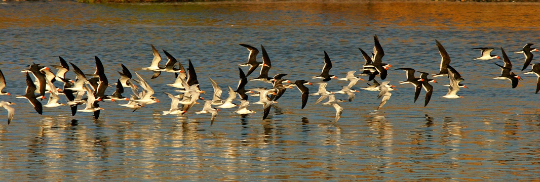 Birds in Batiquitos Lagoon